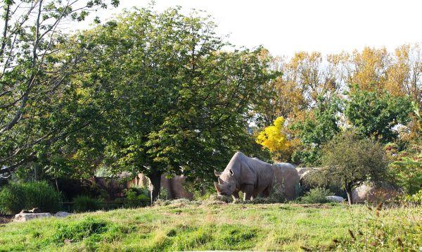 Black Rhino od Spitzmaul= nashorn